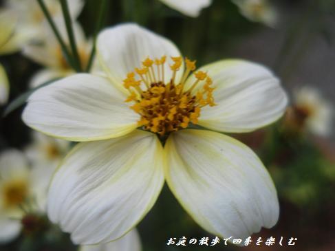 uinta-kosumosu6.jpg