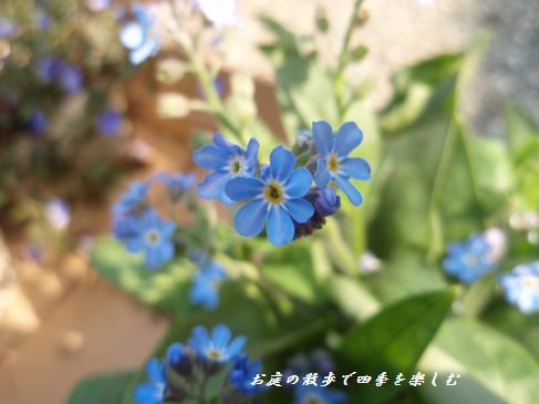 wasurenagusa3.jpg