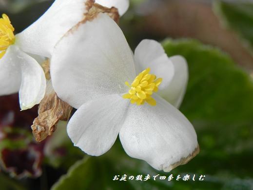 yoseue18.jpg