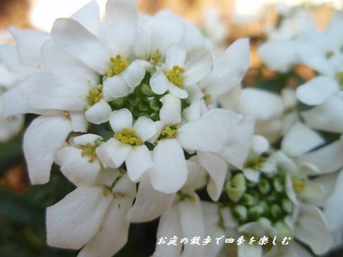 yu-forubia3.jpg