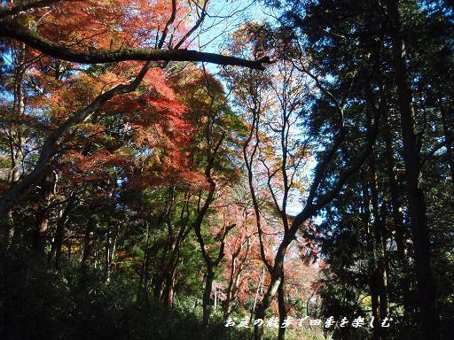 yugawara4.jpg