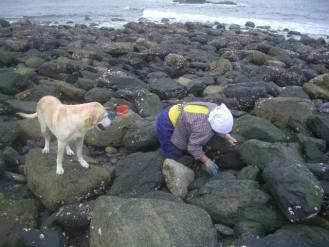 貝採り名人