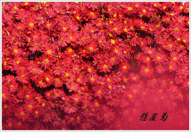 IMG_1146kengaiaka.jpg