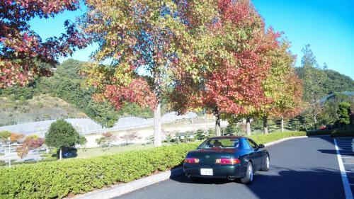 木とソアラ