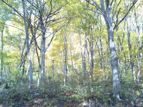 蒜山・大山スカイラインの森