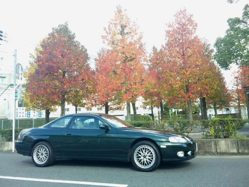 soarer and autumn leaves