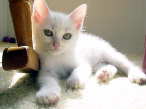 white_20111203111032.jpg