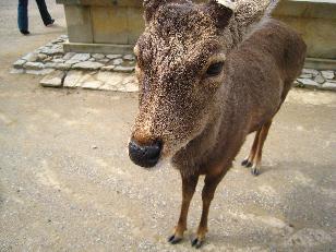 koufukuji04