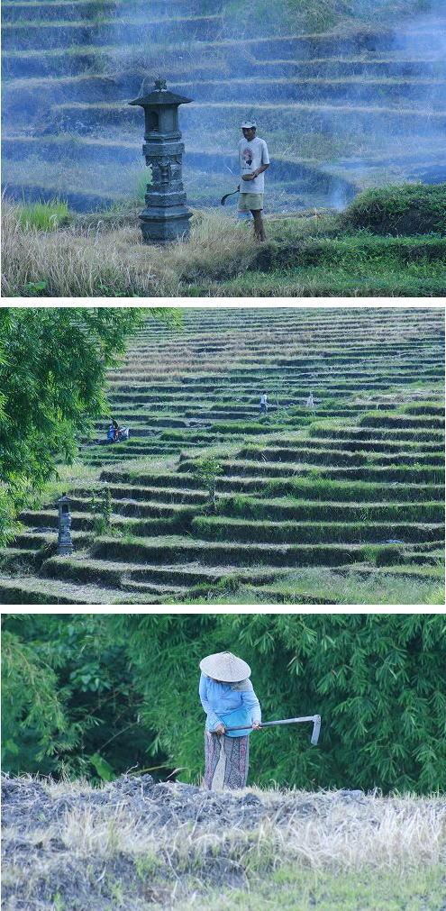 絵になる農民