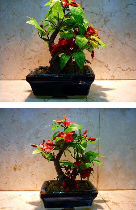 トイレのミニ盆栽