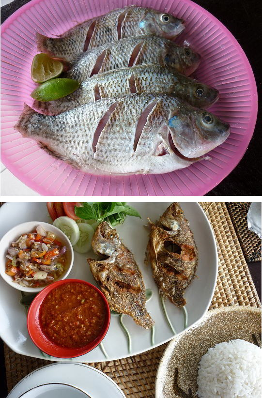 魚の養殖ブログサイズ