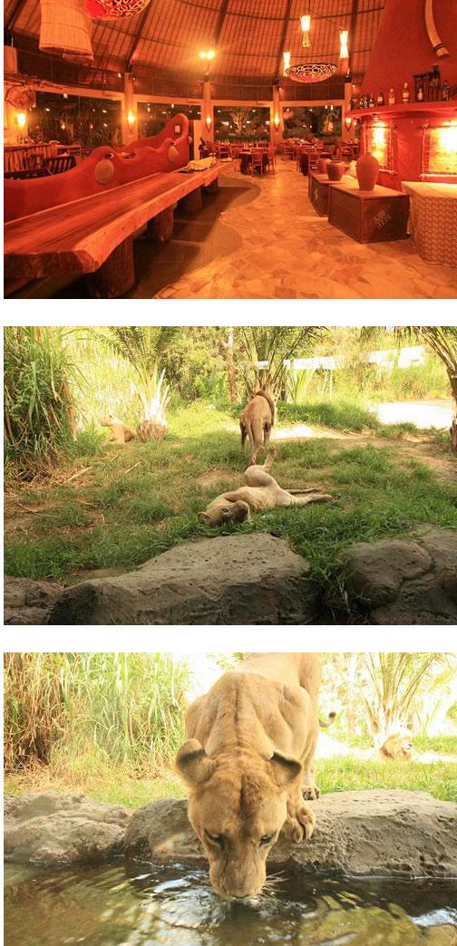 ライオンレストランブログサイズ