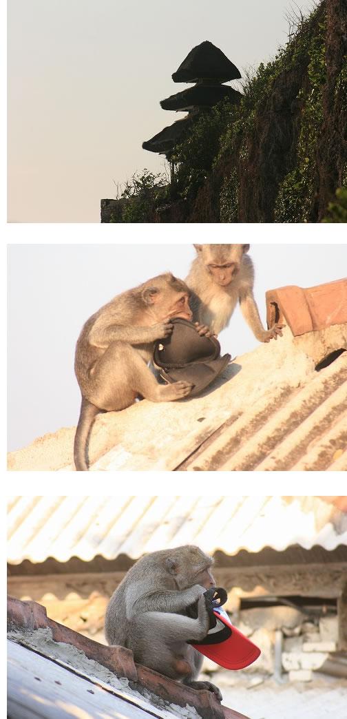 ウルワツ猿ブログサイズ