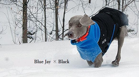 GWN-Blue02.jpg