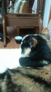 ひっついて離れない猫