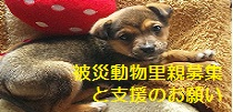 110308_093805_20110324015518.jpg