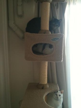 3 Cats 25Dec10