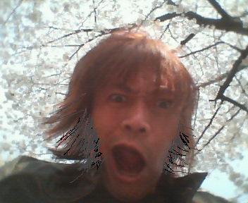 201204SAKURA.jpg