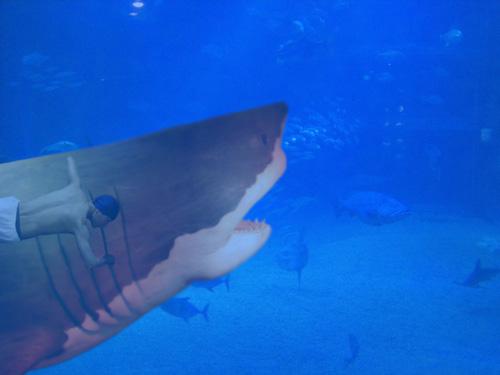 サメに捕まって泳ぐ