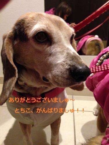 蜀咏悄+(102)_convert_20140117104327