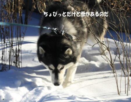20110103_3.jpg