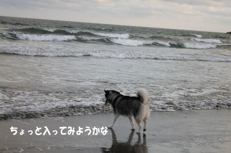 20110109_2.jpg