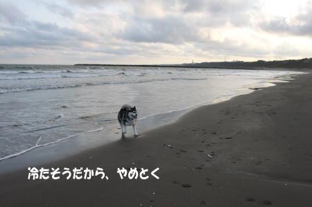20110109_3.jpg