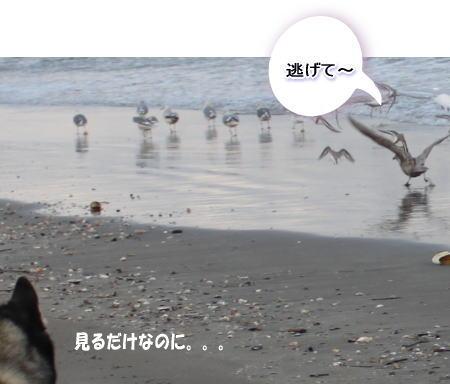 20110109_6.jpg