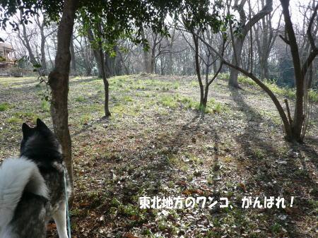 20110314_1.jpg