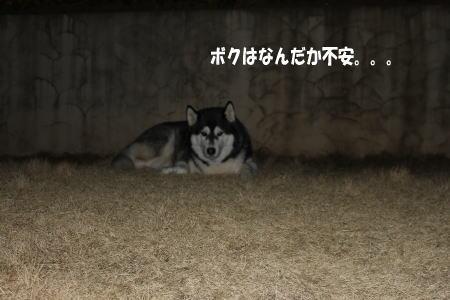 20110316_2.jpg