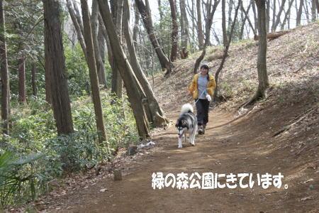 20110320_2.jpg