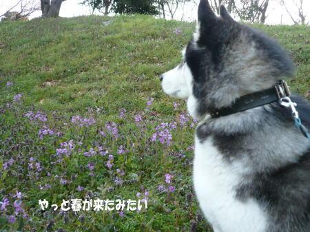 20110403_1.jpg