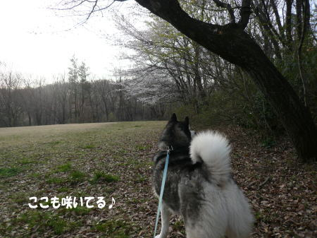 20110410_2.jpg