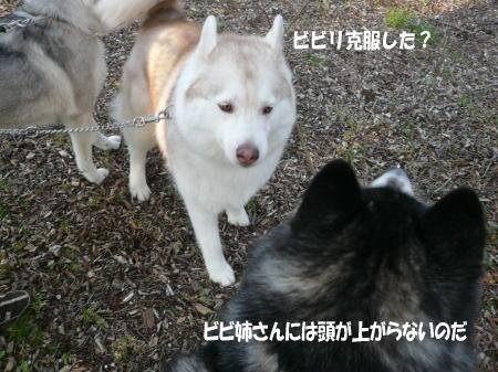 20110412_5.jpg