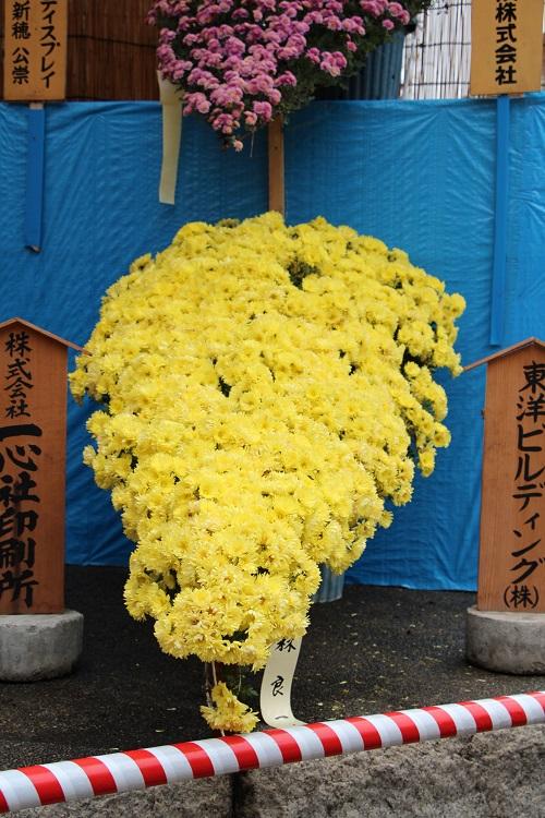 IMG_9589 黄・懸崖