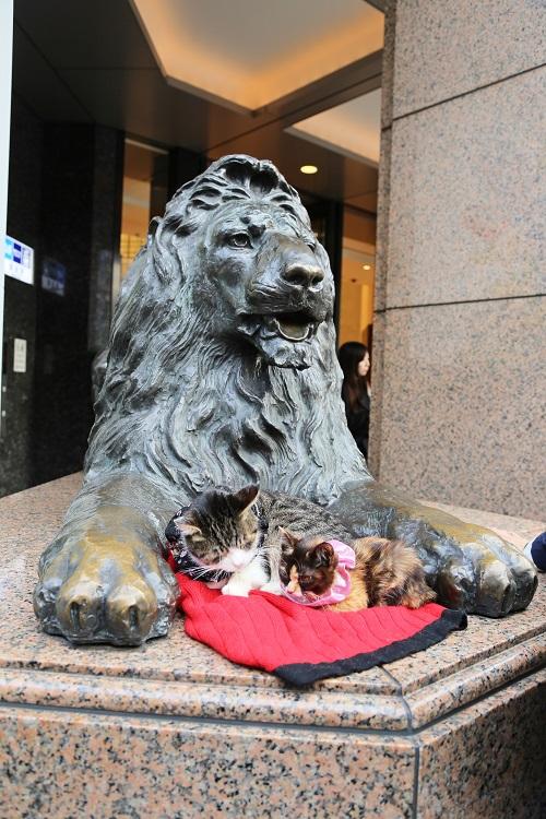 5E0C7808_NEW三越 ライオンと猫