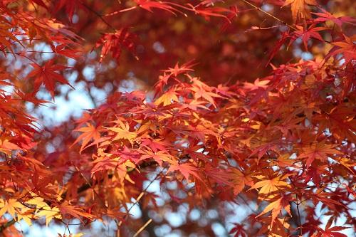 IMG_0261紅葉