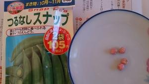 2013-10-01 スナップえんどう 種と種袋