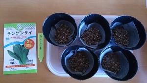 2013-11-25 チンゲン菜 種蒔き