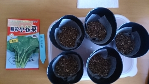 2013-11-25 小松菜 種蒔き