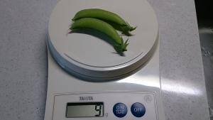 2013-11-26 スナップえんどう 収穫 (2)