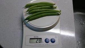 2013-11-26 つるなしいんげん 収穫