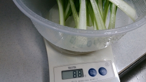 2013-12-09 ビタミン菜収穫 (1)