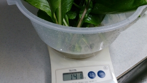 2013-12-09 小松菜収穫 (2)