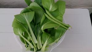 2013-12-03 チンゲン菜 収穫 (2)