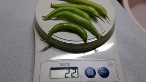 2013-12-20 つるなしいんげん 防寒対策 (5)