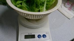 2013-12-19 サラダ菜収穫
