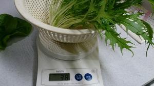 2013-12-19 水菜収穫