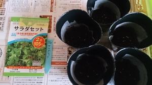 2013-11-28 サラダセット 種蒔き