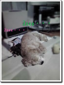 ベタベタ犬~♪